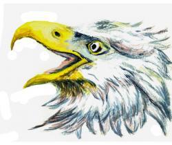 bird eagle