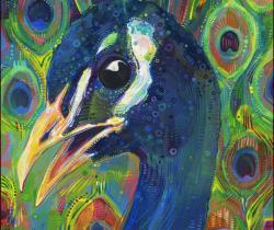 Blue peafow