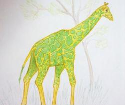 Brazilian Giraffe