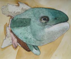 Byron Bay Fish