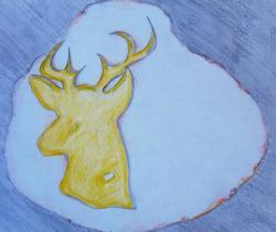Muntjac Deer Nature Drawings Pictures Drawings Ideas