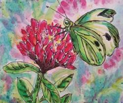 Happy as a Butterfly in Clover