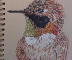 Rufuous hummingbird