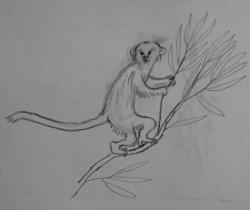 monkey drawn from memory