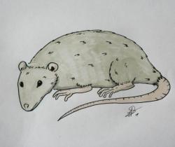 Mr Rat
