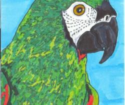 parrot named jake