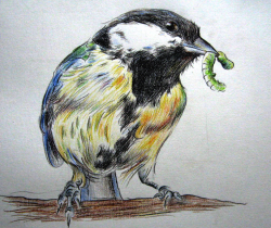 tit with a caterpillar