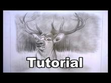 Embedded thumbnail for How to draw a Deer