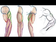 Embedded thumbnail for How to draw the Muscles of the Arm