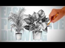 Embedded thumbnail for How to draw plants